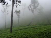 Travelogue: Nilgiri Mountains